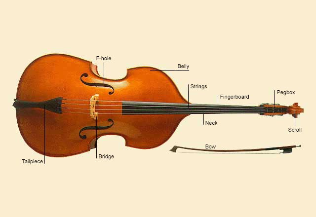 picture of Double Bass
